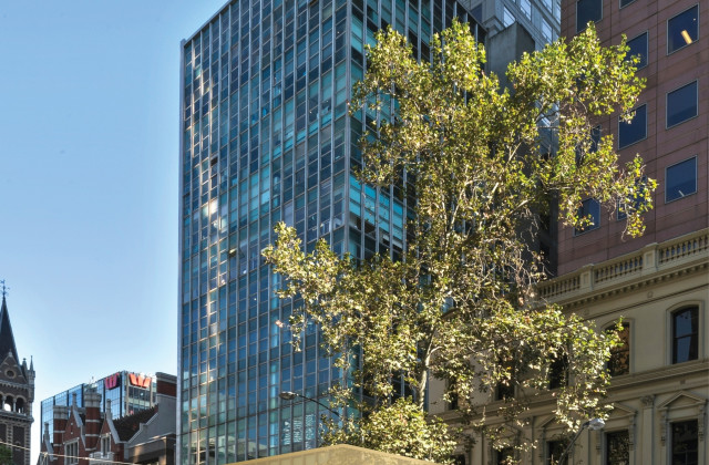 Level 2/100 Collins Street, MELBOURNE VIC, 3000